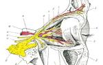 Тромбоз внутренней сонной артерии реферат
